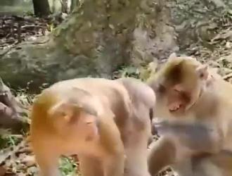 حيوان ونساا
