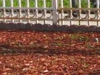 جبهة مورو لاتينا فاتنة روكسي جيزل تتمتع الديك ضخمة في عمق بوسها ، قبل الحصول على الحمار مارس الجنس من الصعب.