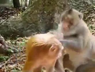 حزب اللعنة الحيوان الحلو.
